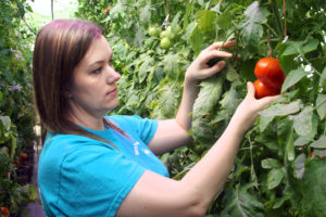 Mandy inspecting tomatoes on the vine
