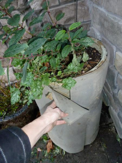 Potted plant with protective wrapping