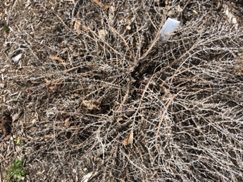 Winter damage image
