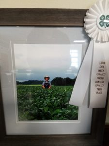 photo of am man in a tobacco field