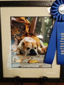 photography winner - photo of dog