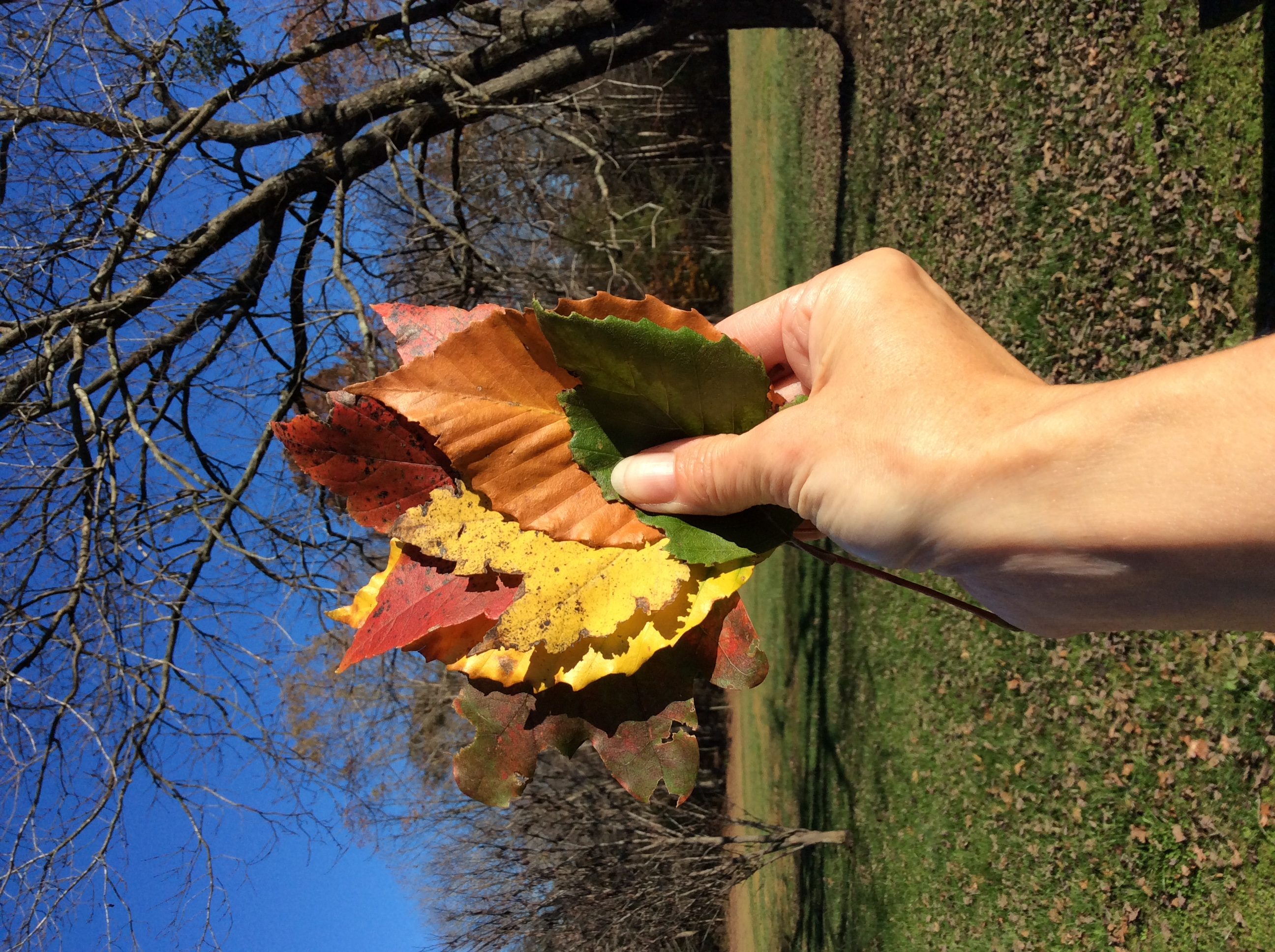 hand holding colorful fall leaves