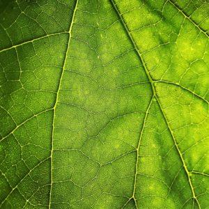 Unsplash closeup leaf photo of a leaf by Maros Misove