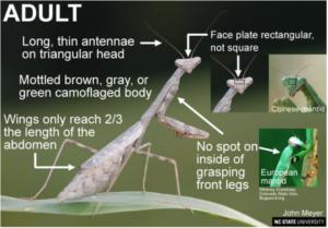 Cover photo for Praying Mantis – Garden Hunters